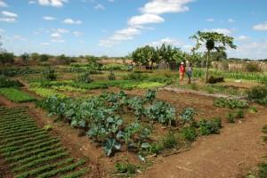 GemüsegartenPACS