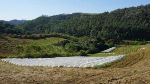 Feld eines Kleinbauern mit Erdbeeren und Gemüse.